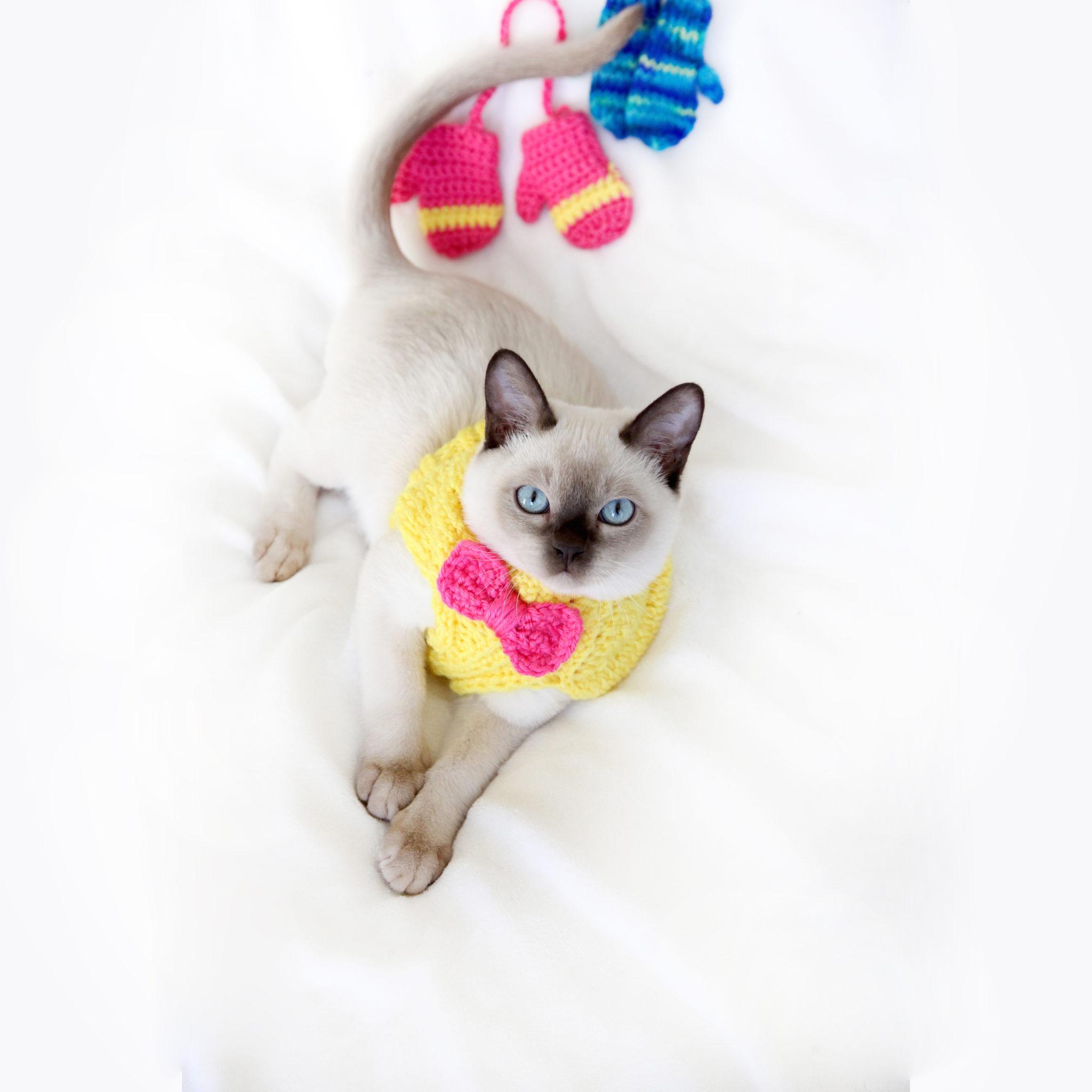 From Smugmug Folder — Cat 2