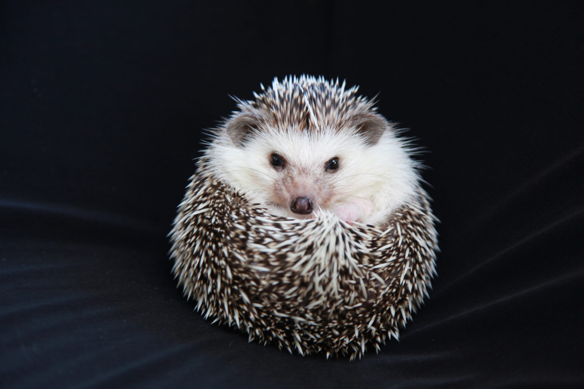 Hedgy_420